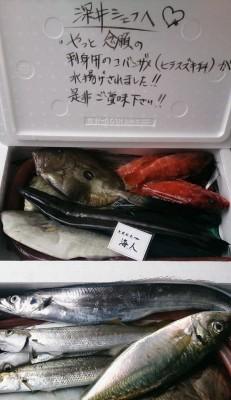 2013.11.28の朝獲れ直送便